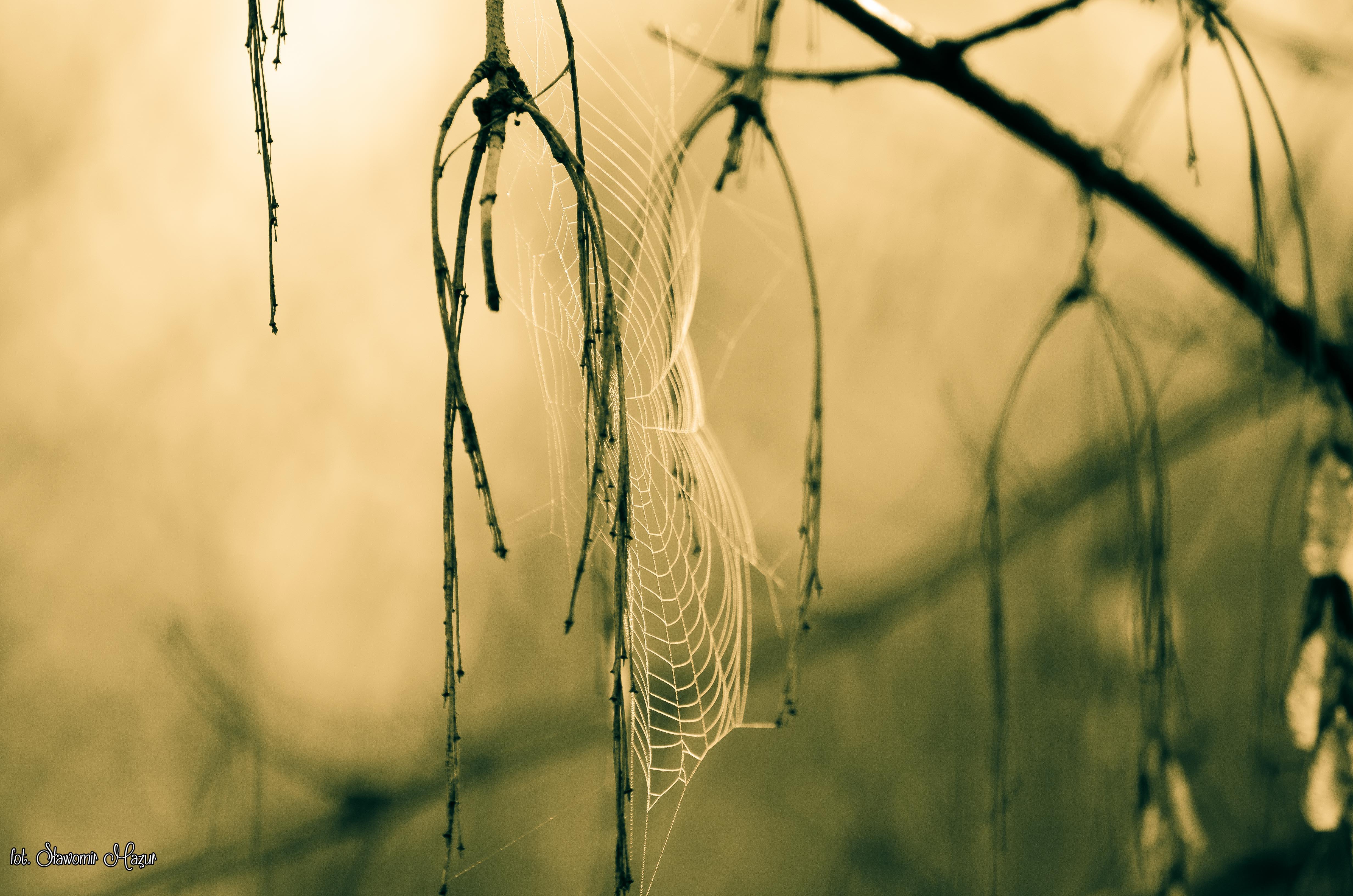 spider artist weaver2