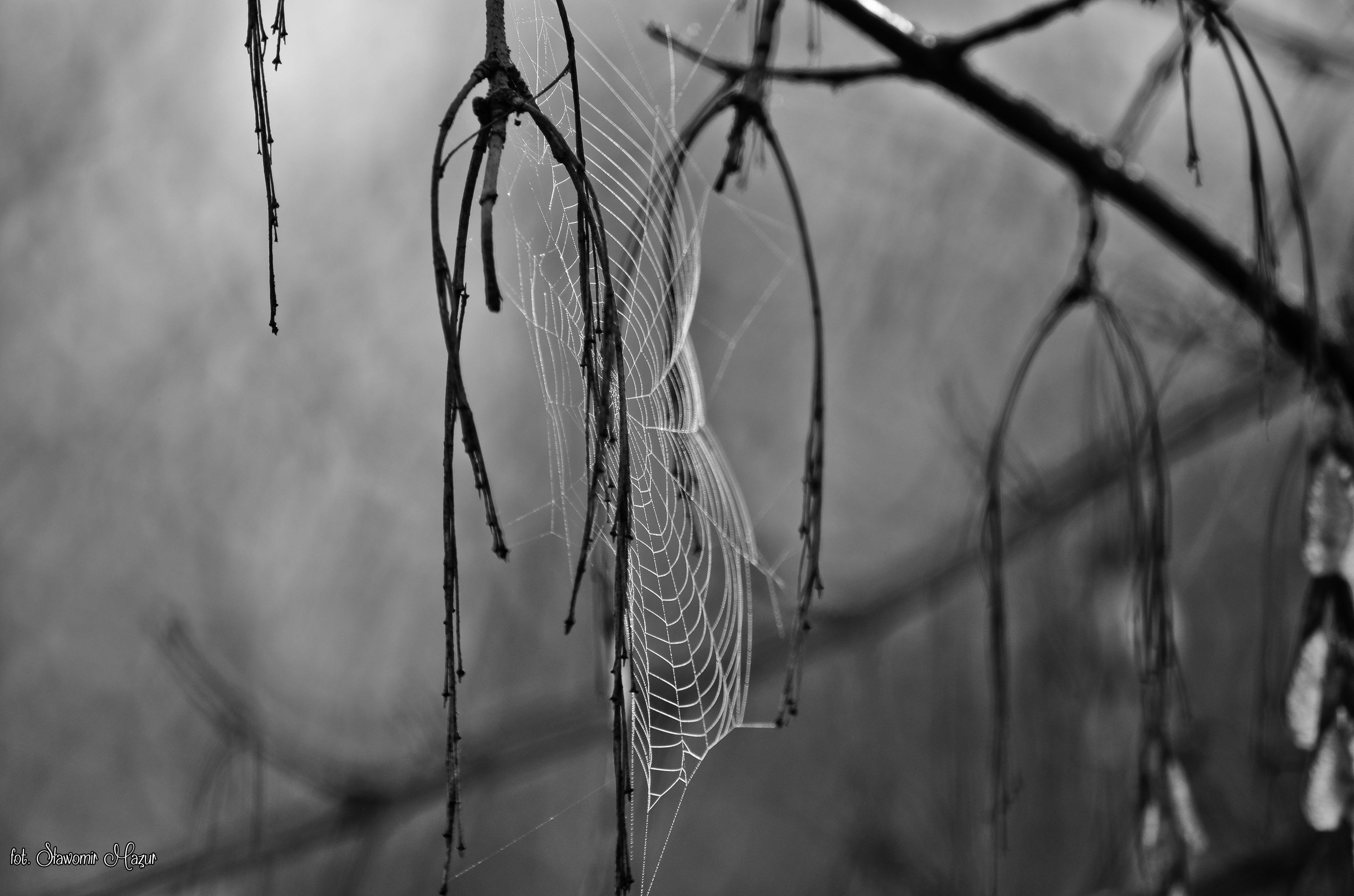 spider artist weaver