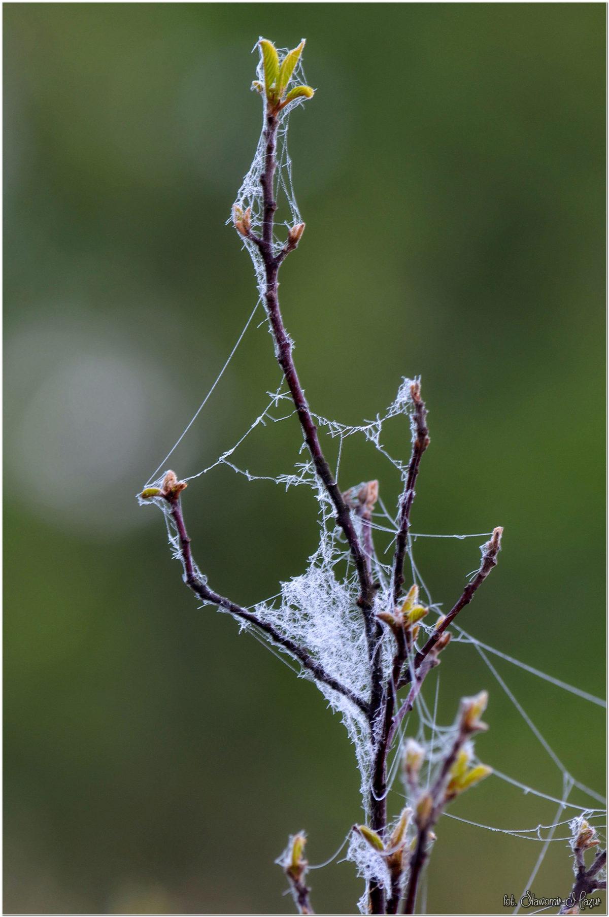 W objęciach pajęczyny