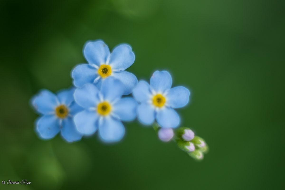 Kwiaty z bajki